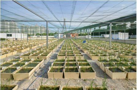 PVC抗菌材料的种植斗(栽培容器)